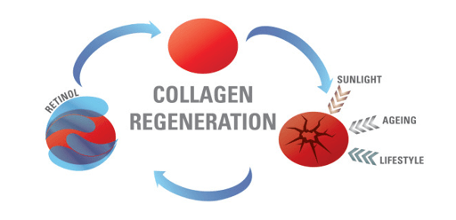 Retinol Collagen regeneration